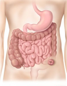 The Digestive System showing a Sigmoid Colostomy in the Colon